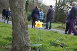 Daffodil- heritage Walks - Medium